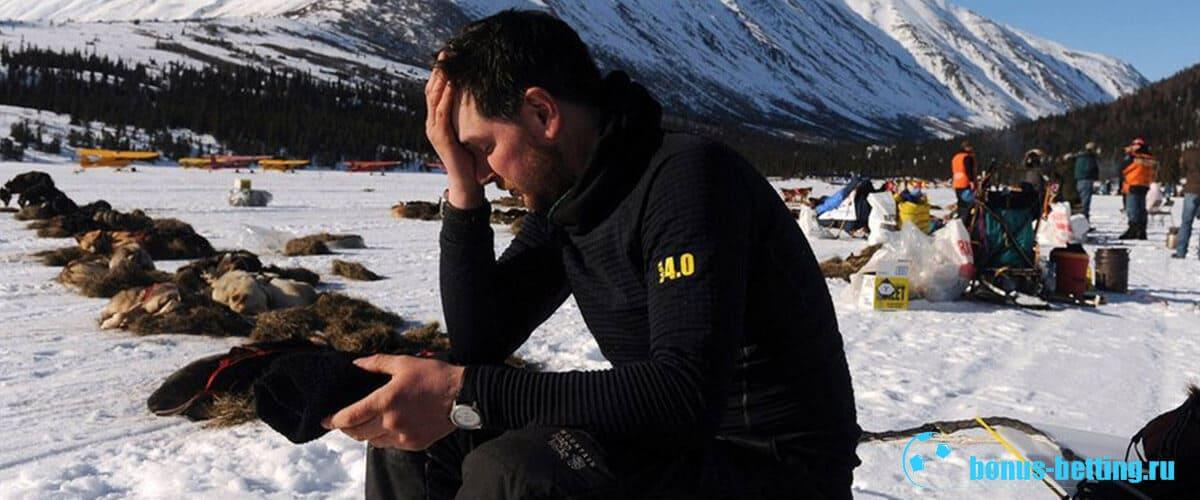 гонки на собачьих упряжках Аляска