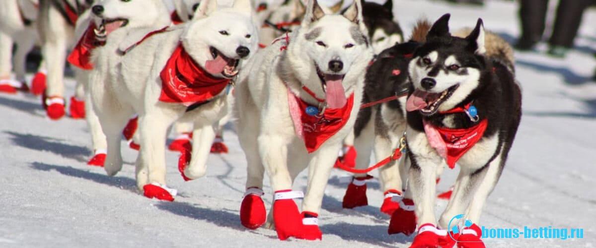 Iditarod гонки на собачьих упряжках