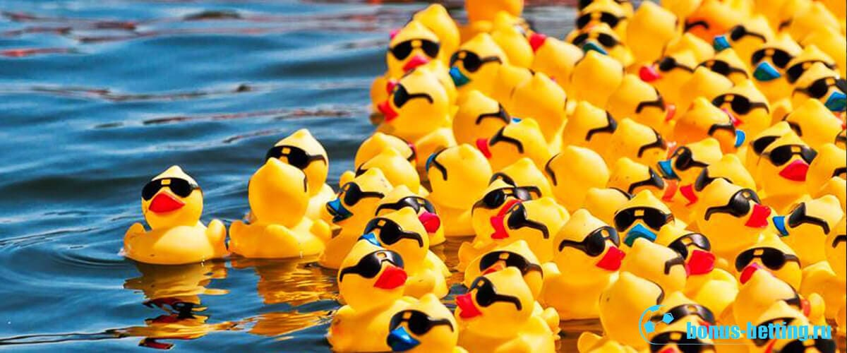 гонки уток на воде
