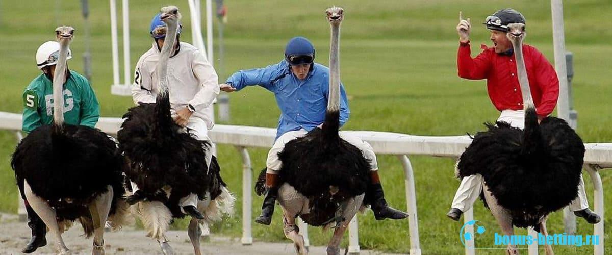 страусиные бега