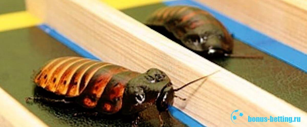тараканьи забеги