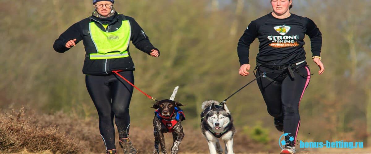 бег с собаками
