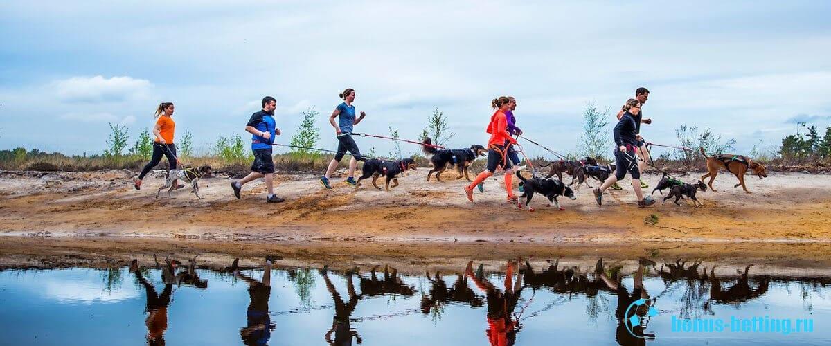 спортивный бег с собакой