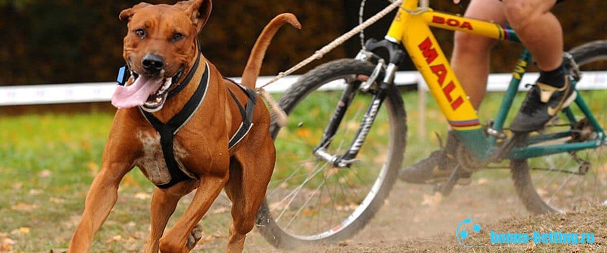 собаки в спорте