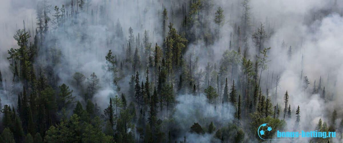 Пожары в Сибири начали тушить