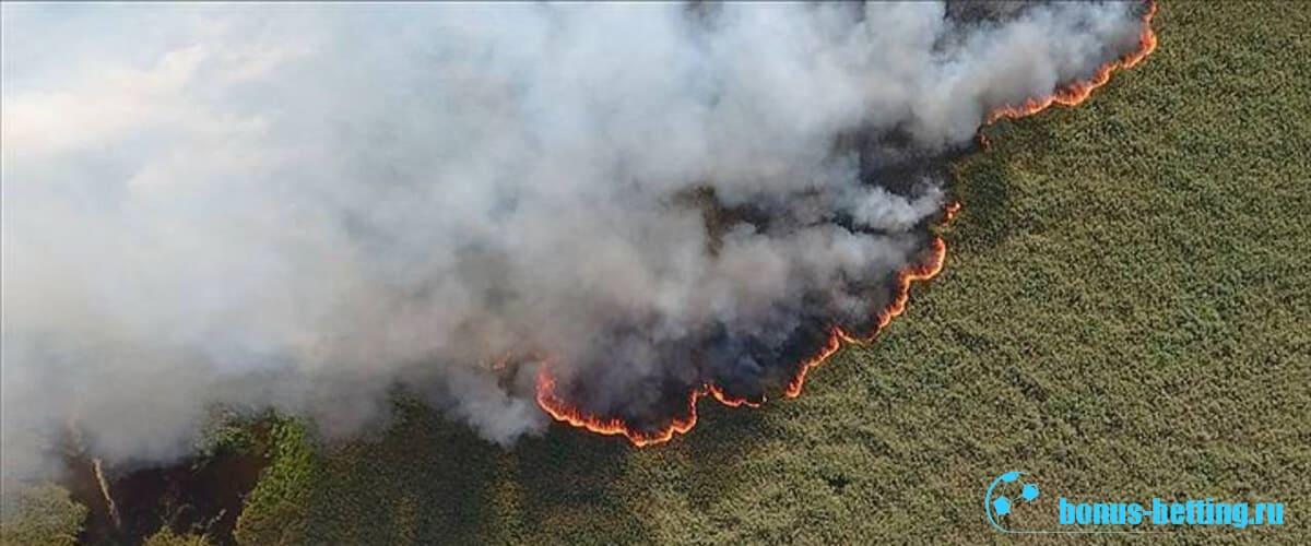 лесные пожары в Сибири 2019 со спутника