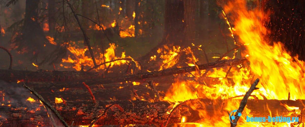 лесные пожары в сибири 2019