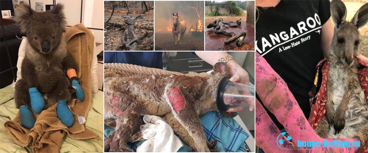 Пожары в Австралии уносят жизни людей и животных