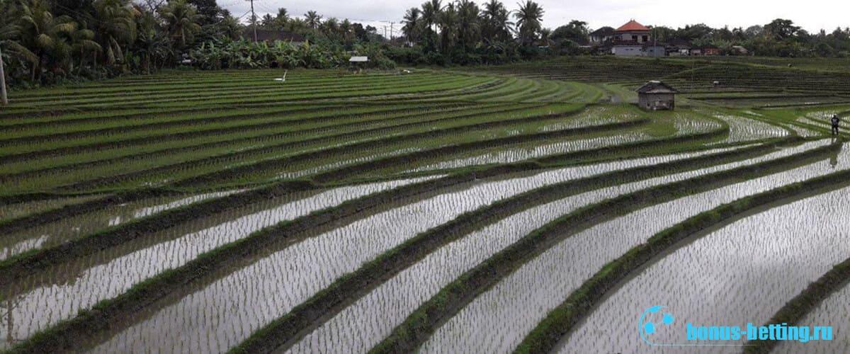 Рисовые поля Индия