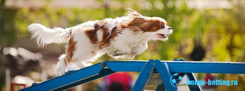 Аджидити для собак