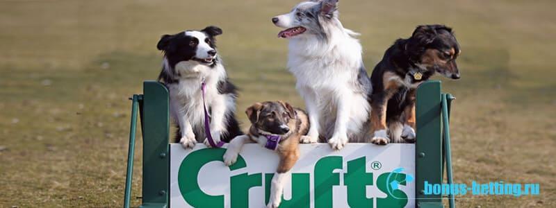 крафт выставка собак 2020