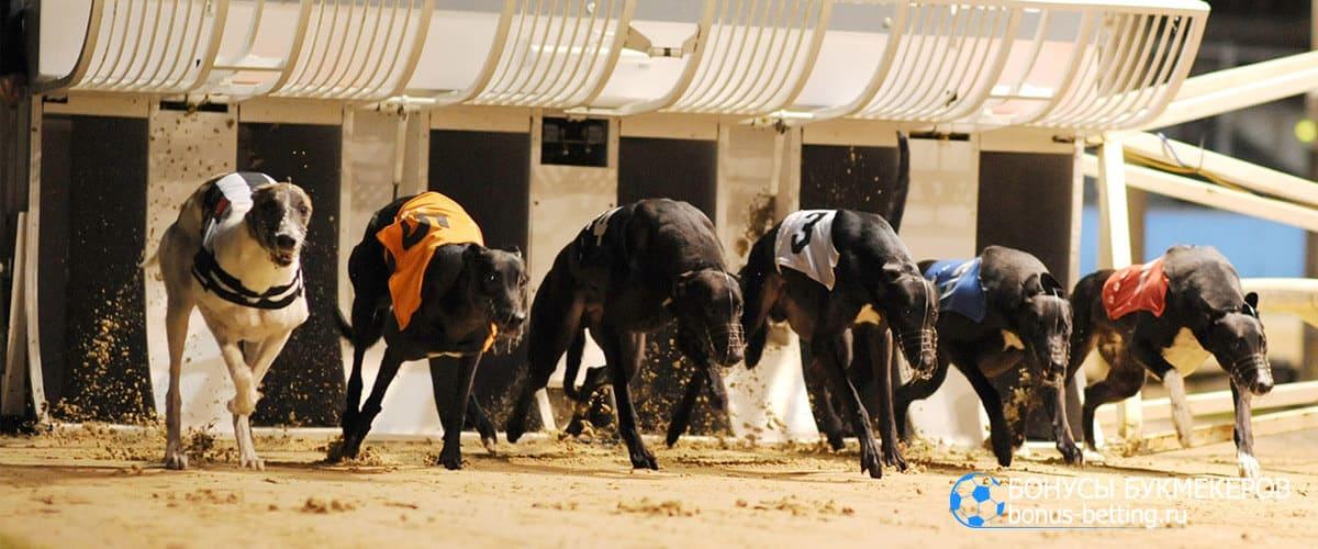 Собачьи бега боксы