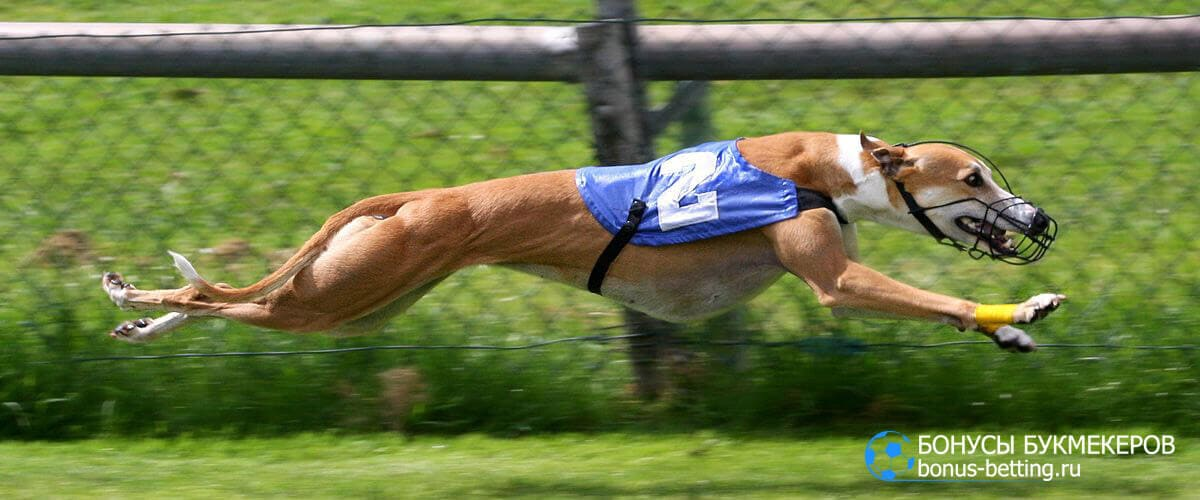 Собачьи бега классы