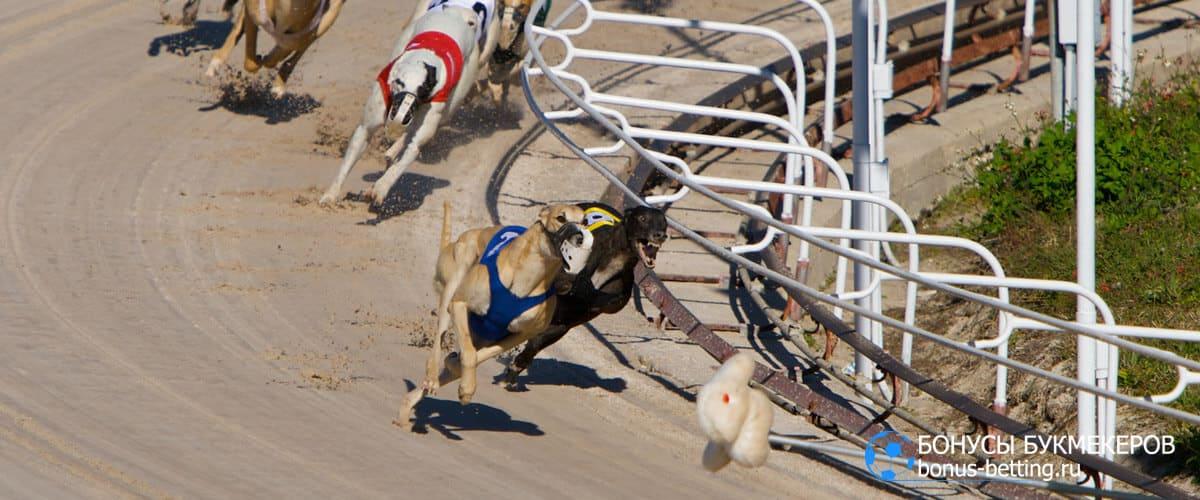 собачьи бега за механическим зайцем